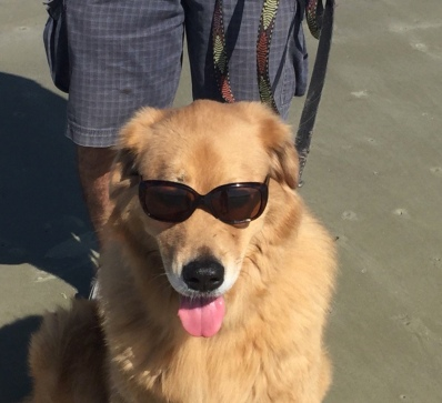 BB dog with glasses